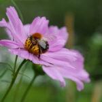 Eine Hummel im Garten der Sinne sitzt auf einer Blüte